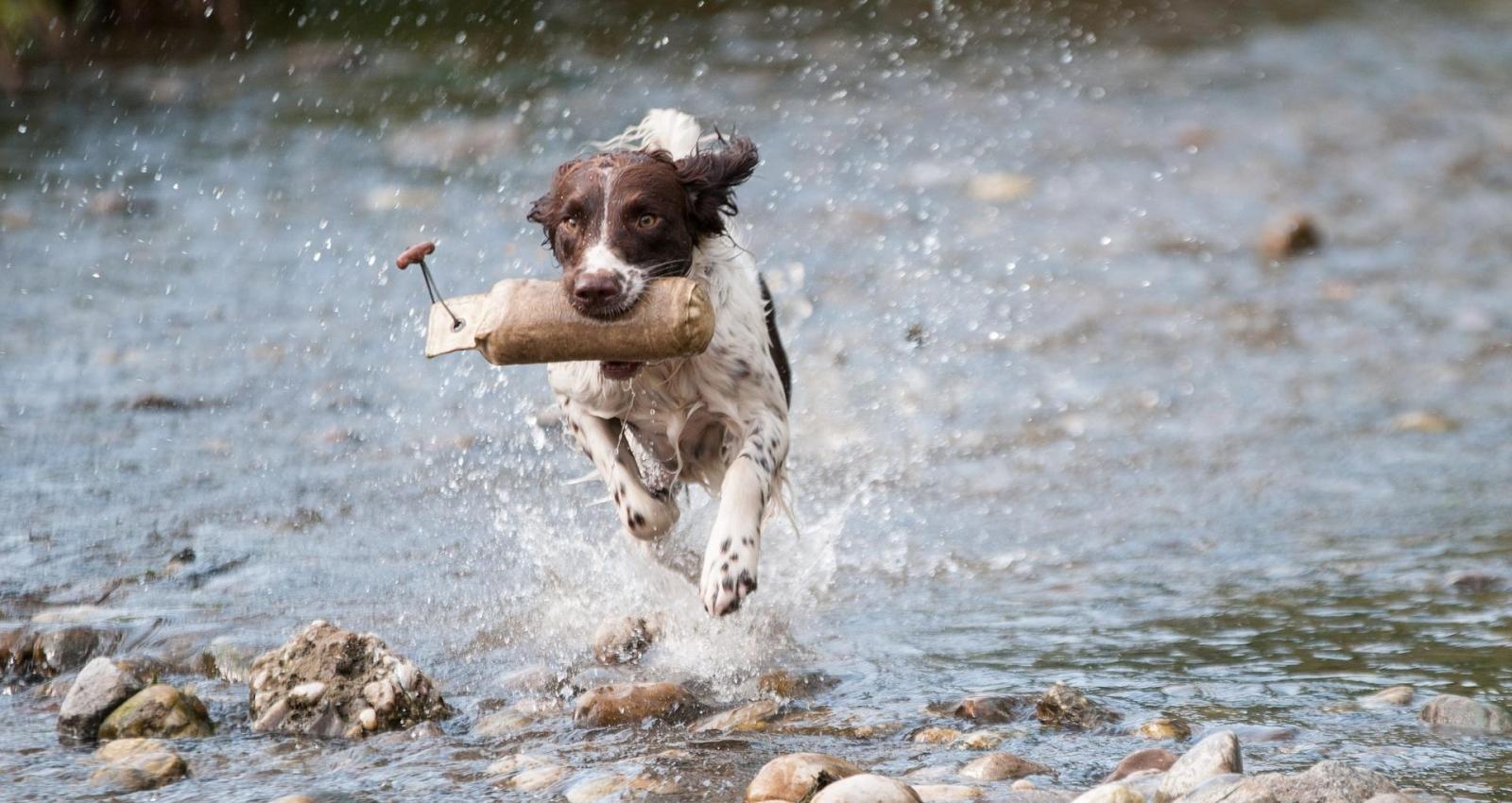 Inspirierend Schöne Hunderassen Sammlung Von Next